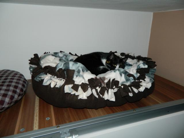 anleitung katzenbettchen ohne n hen seite 41 katzen forum. Black Bedroom Furniture Sets. Home Design Ideas