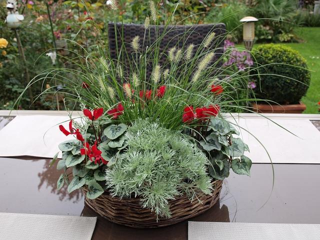 Plaudereien ber zimmerpflanzen und andere sch ne dinge - Herbstbepflanzung garten ...