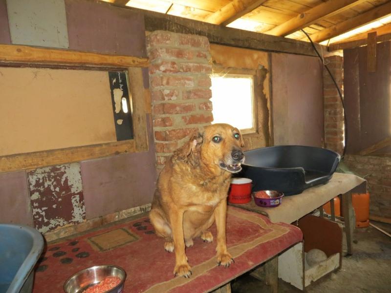 Balto - eine zerbrochene Seele lebt auf einem Tisch 15866850iv