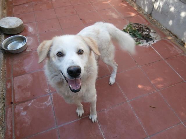 Hunde in Italien - ein ganzes Leben im Canile - Seite 2 15892138ah