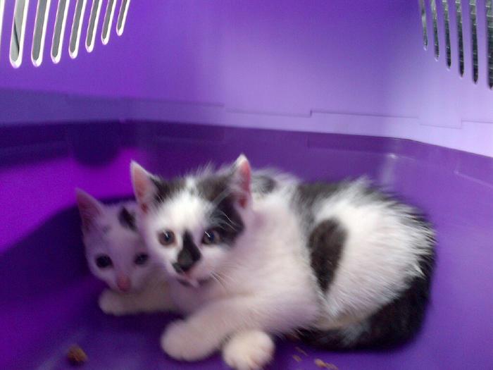 Katzenkinder suchen Zuhause 15900598ik