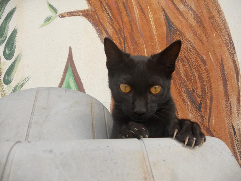 Europa Spanien Kleines Verspieltes Katzenkind Ippa Geb Ca 04 2013 Katzen Forum