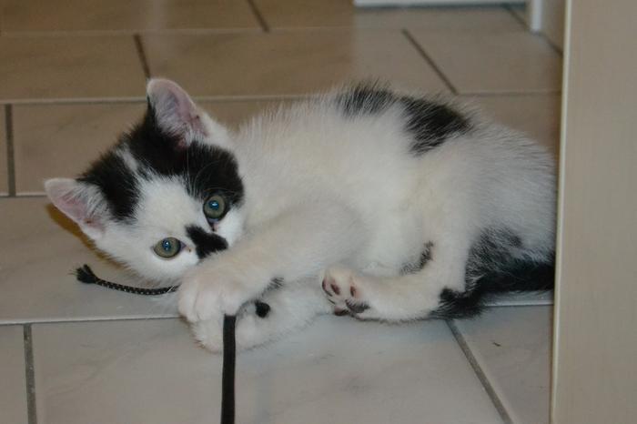 Katzenkinder suchen Zuhause 15929240zs