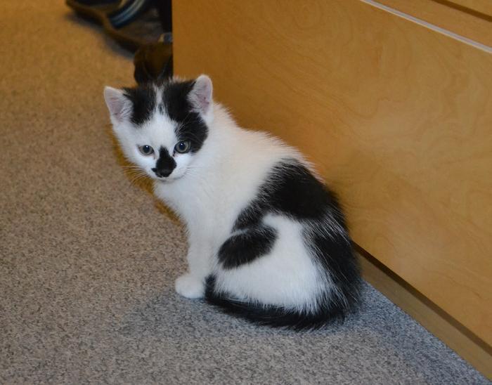Katzenkinder suchen Zuhause 15929242cf