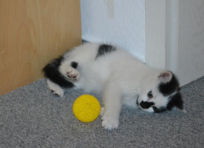 Katzenkinder suchen Zuhause 15929244cn