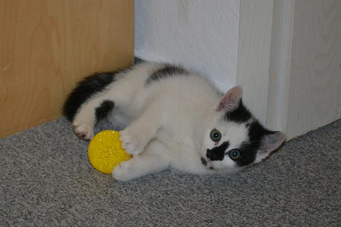 Katzenkinder suchen Zuhause 15929245cb