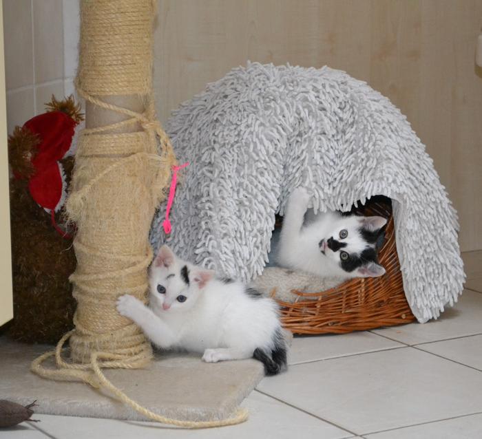 Katzenkinder suchen Zuhause 15929246qf