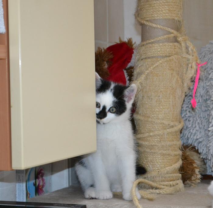 Katzenkinder suchen Zuhause 15929248lv