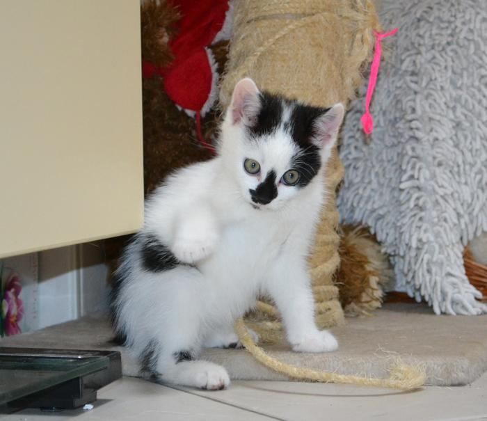 Katzenkinder suchen Zuhause 15929294il