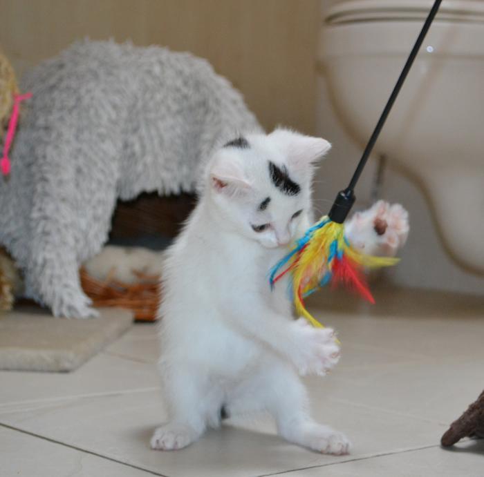 Katzenkinder suchen Zuhause 15929295nr