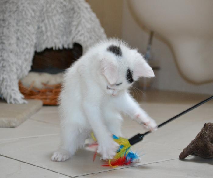 Katzenkinder suchen Zuhause 15929296wg