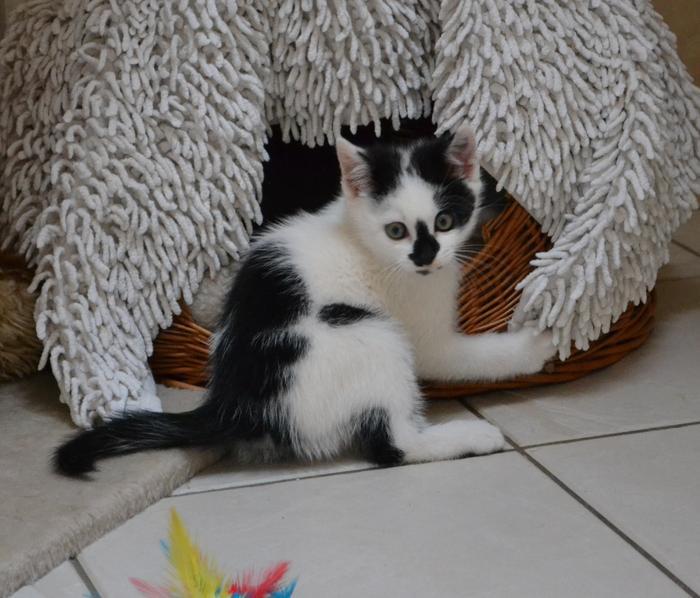 Katzenkinder suchen Zuhause 15929299nm