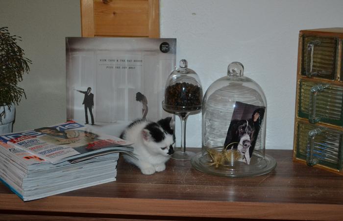 Katzenkinder suchen Zuhause 15929302sm
