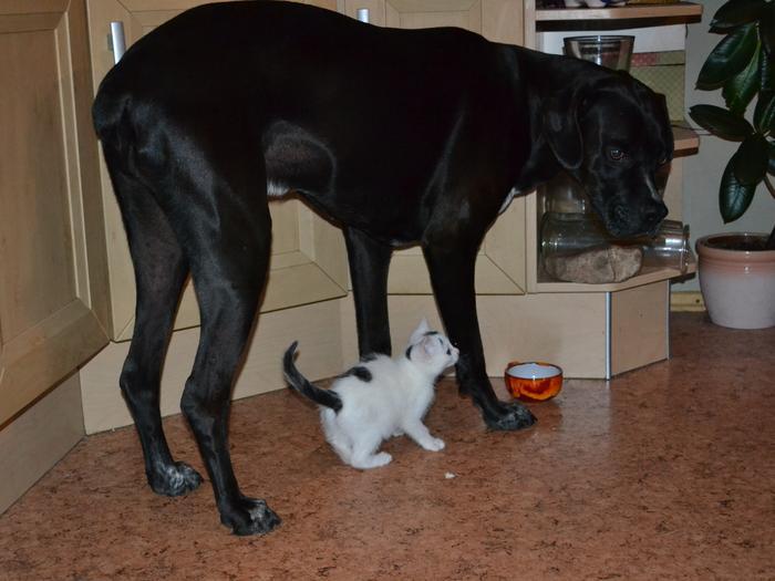 Katzenkinder suchen Zuhause 15961240jm