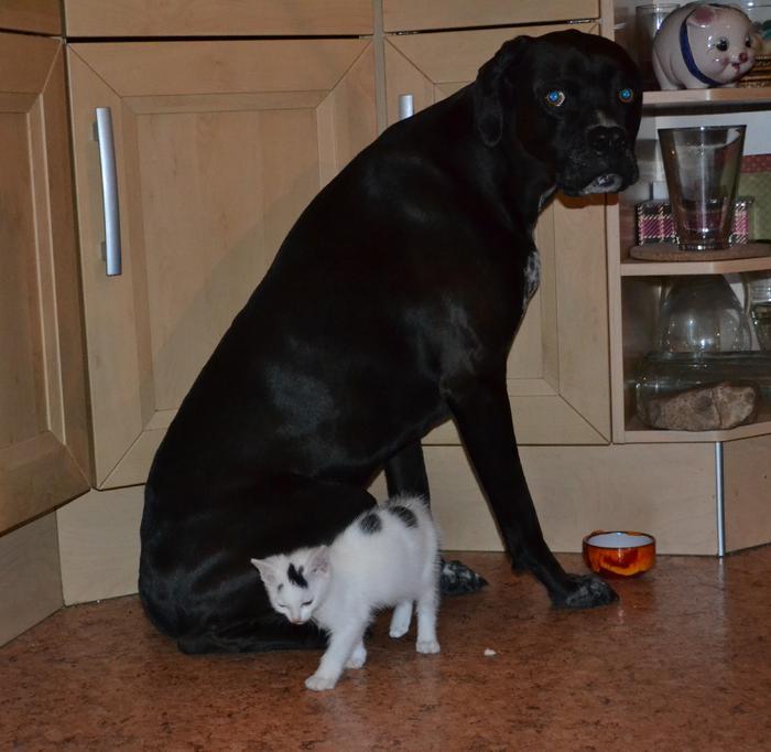 Katzenkinder suchen Zuhause 15961243pe