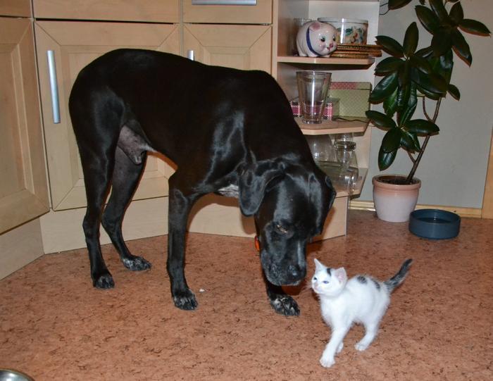 Katzenkinder suchen Zuhause 15961245eu