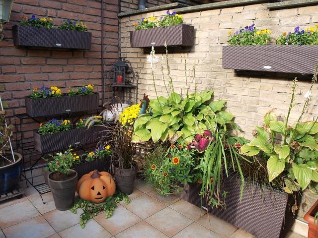 plaudereien ber zimmerpflanzen und andere sch ne dinge des lebens page 140 mein sch ner. Black Bedroom Furniture Sets. Home Design Ideas