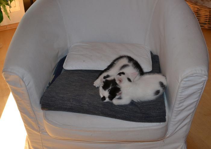 Katzenkinder suchen Zuhause 16017851jv