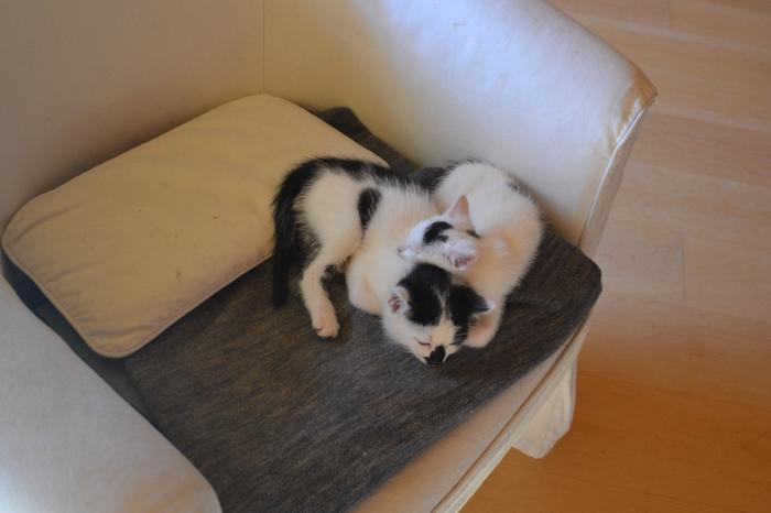 Katzenkinder suchen Zuhause 16017852yd