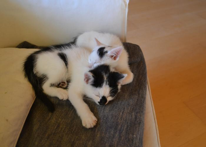 Katzenkinder suchen Zuhause 16017854pu