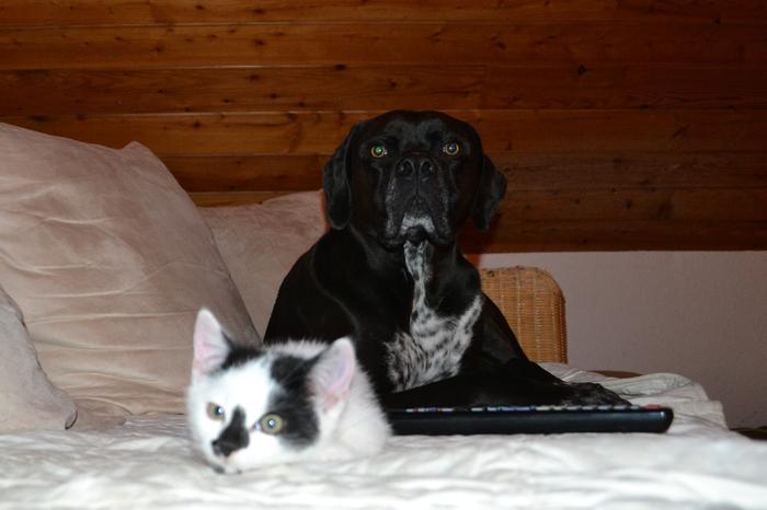 Katzenkinder suchen Zuhause 16043091qi