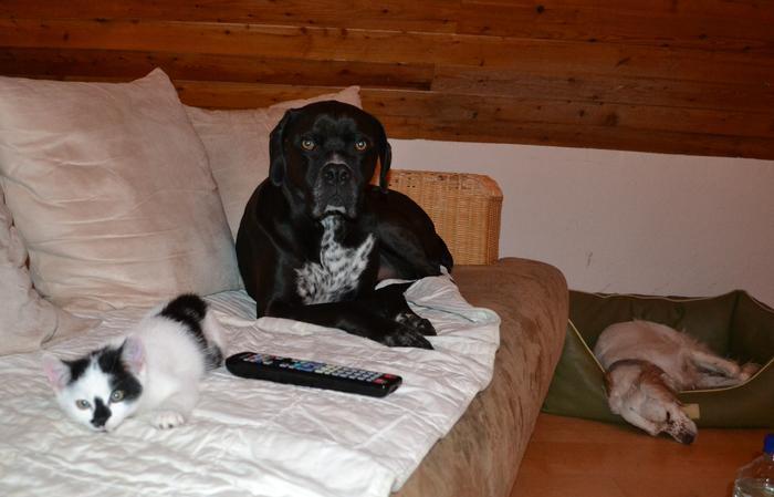 Katzenkinder suchen Zuhause 16043093nd