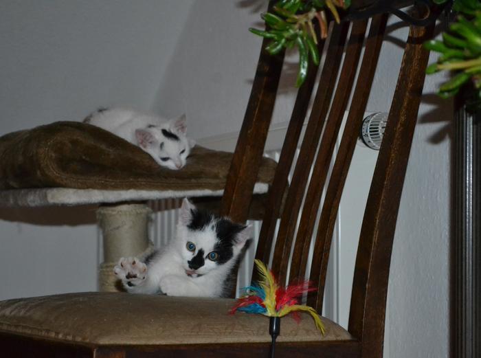 Katzenkinder suchen Zuhause 16043099gk