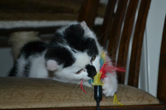 Katzenkinder suchen Zuhause 16043100wq