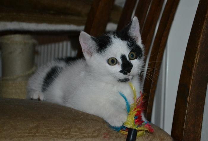 Katzenkinder suchen Zuhause 16043102vu