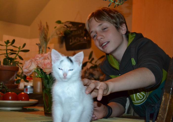 Katzenkinder suchen Zuhause 16043333pp