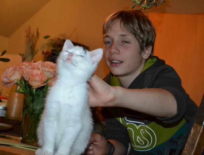 Katzenkinder suchen Zuhause 16043334yr