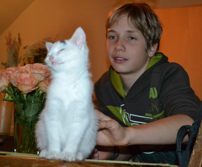 Katzenkinder suchen Zuhause 16043335lm