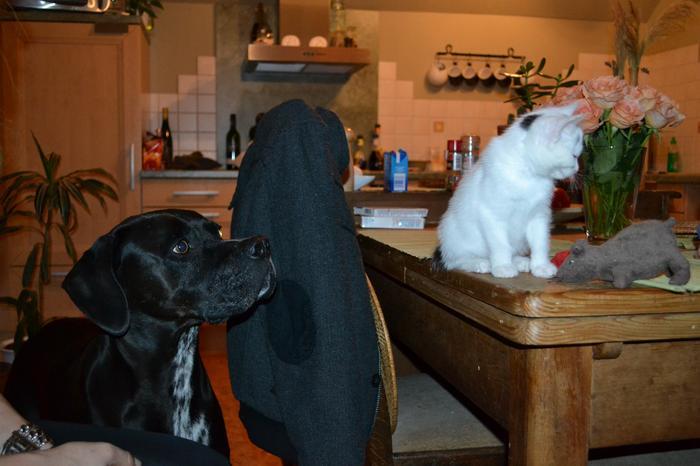 Katzenkinder suchen Zuhause 16043336ao