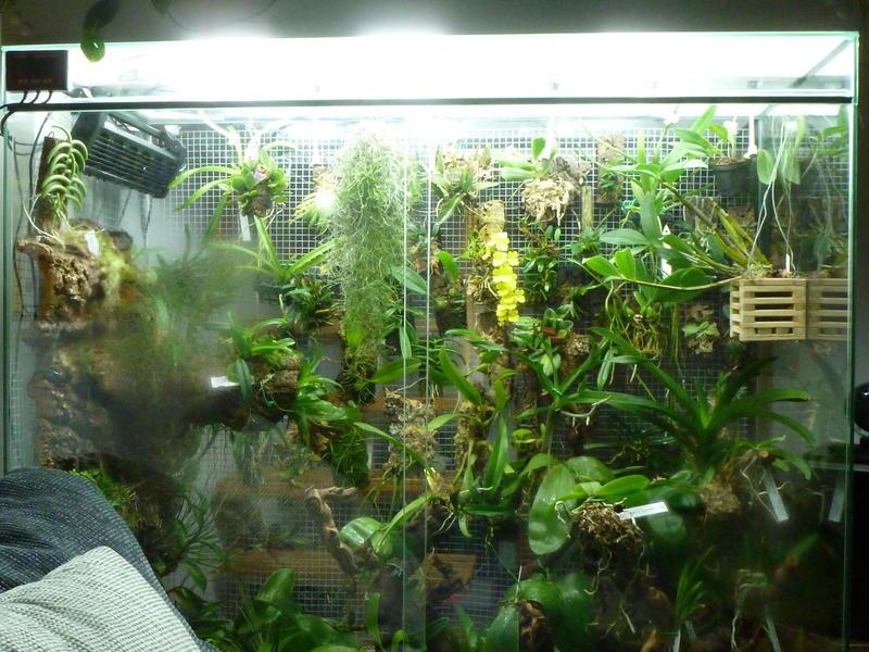 meine neue herausforderung vitrine mit miniorchideen orchideenforum. Black Bedroom Furniture Sets. Home Design Ideas