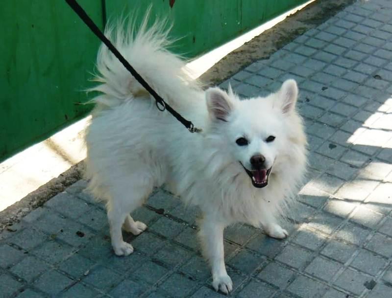 pfotenhilfe andalusien hunde