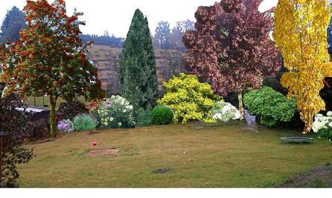 Schnellwachsende Straucher Hilfe Mein Schoner Garten Forum