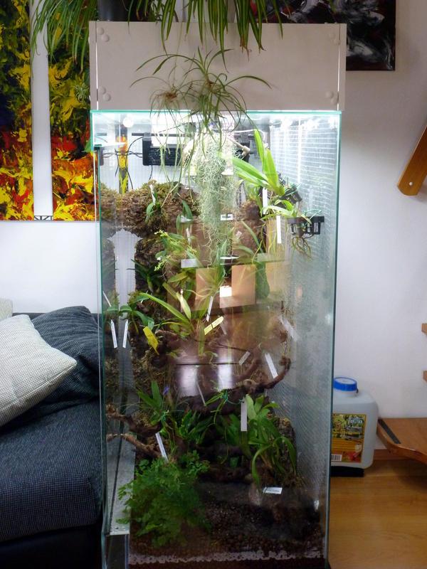 langzeit projekt vitrine eine geschichte mit zukunft orchideenforum. Black Bedroom Furniture Sets. Home Design Ideas