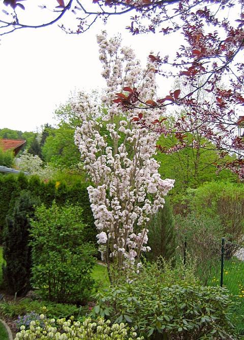 Hoher Schmaler Strauch Oder Baum Gesucht Mein Schoner Garten Forum