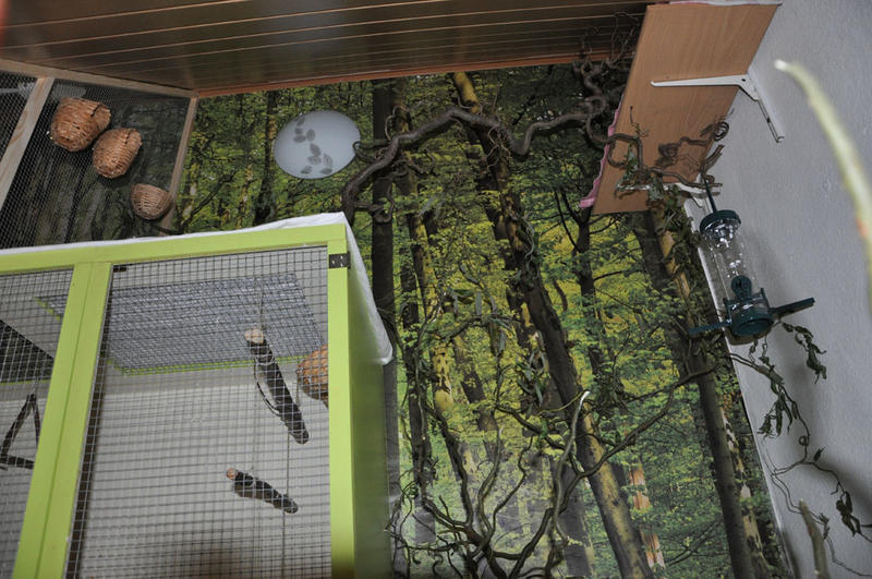 Auch ein Vogelzimmer - Volieren und Vogelzimmer - Prachtfinken-Portal
