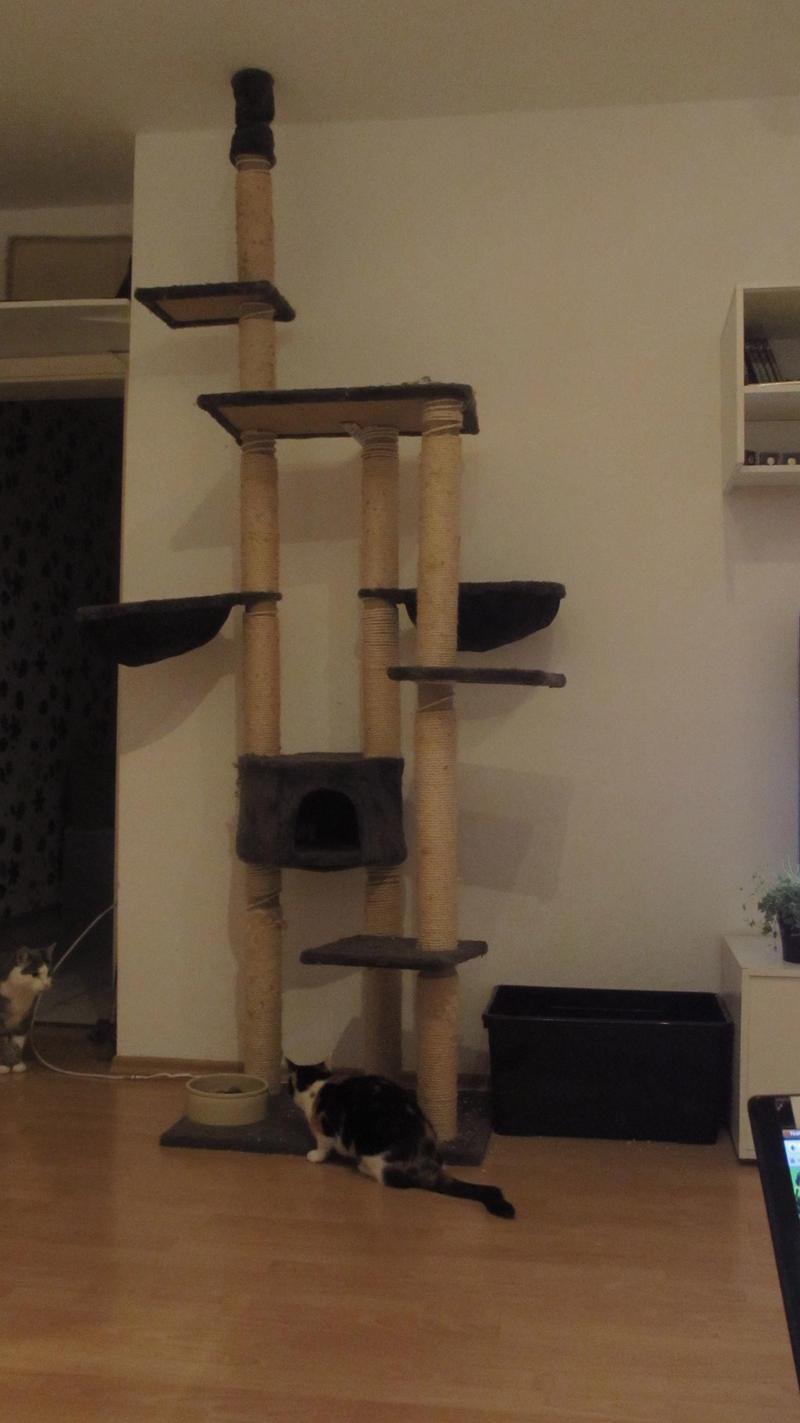 kratzbaum teile austauschen oder neu kaufen oder. Black Bedroom Furniture Sets. Home Design Ideas