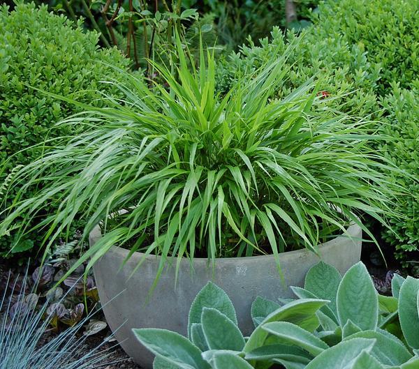 Die Schönsten Gräser Für Den Garten zeigt doch mal eure schönsten gräser und stellt sie vor mein