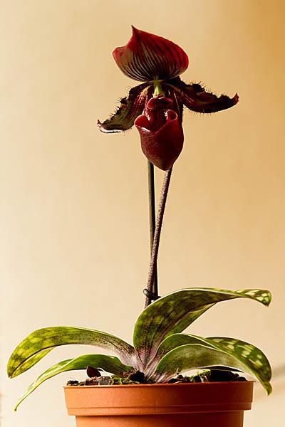 orchidee und wie weiter page 2 mein sch ner garten forum. Black Bedroom Furniture Sets. Home Design Ideas