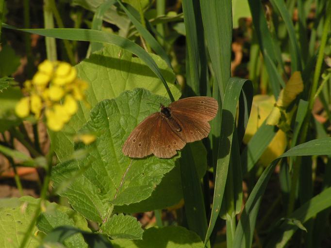 Schmetterlinge / Falter 16296601vy