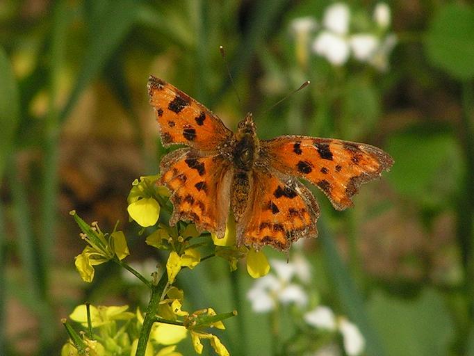 Schmetterlinge / Falter 16296602iu