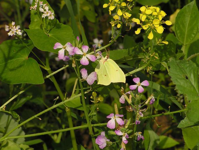 Schmetterlinge / Falter 16296604jn