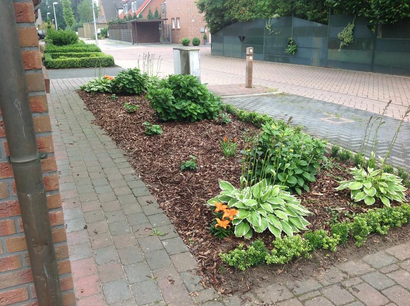 Gehoelz fuer nordseite vor hausgiebel gesucht seite 1 for Gartengestaltung nordseite