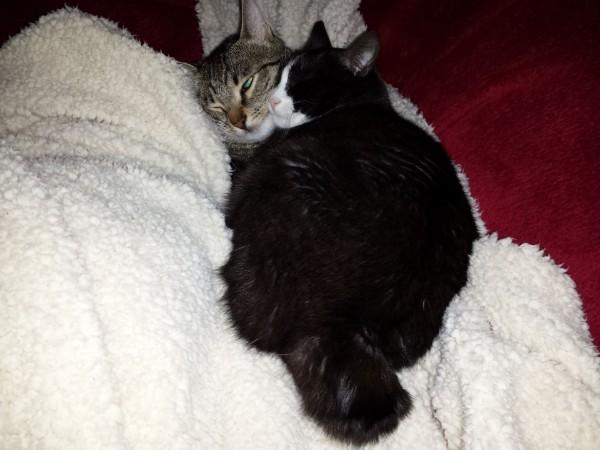 katzen forum warum zwei katzen besser sind als eine. Black Bedroom Furniture Sets. Home Design Ideas