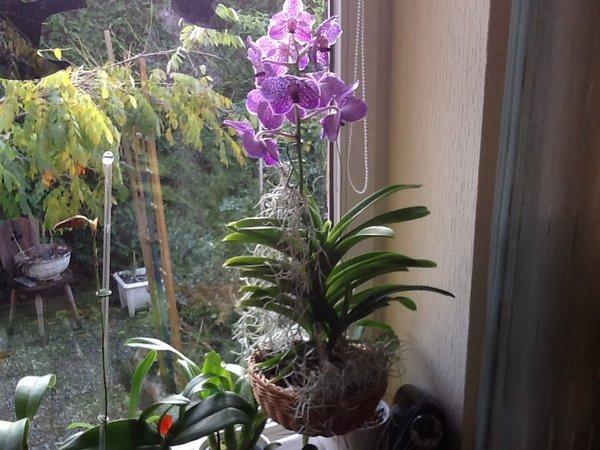 orchidee und wie weiter seite 12 pflanzenfragen mein. Black Bedroom Furniture Sets. Home Design Ideas