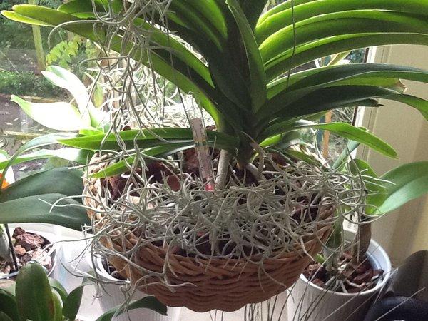 orchidee und wie weiter page 12 mein sch ner garten forum. Black Bedroom Furniture Sets. Home Design Ideas