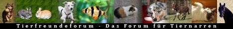 Ein kleines nett aufgemachtes Forum, für alle, die gerne rund ums Thema Tiere plaudern. Wir beherbergen alle Tierarten von Hund, Katze, Maus, Kaninchen, Vögel über Esel, Pferde, Fische, Reptilien. Jeder ist herzlich willkommen.